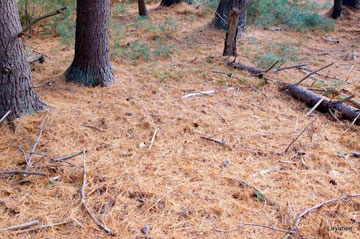 Kosich Yard Cleanup service in Lake Tahoe